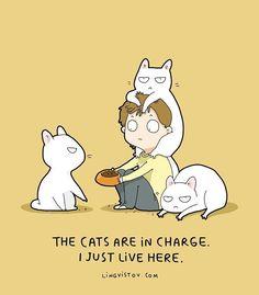 "#cat #catsofinstagram #lovecats #instacats #instagramcats #ilovecats…"""