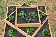 If space is an issue the answer is to use garden boxes. In this article we will show you how all about making raised garden boxes the easy way. Tiered Planter, Garden Planter Boxes, Tiered Garden, Rustic Planters, Indoor Planters, Outdoor Plants, Plants Indoor, Building A Raised Garden, Raised Garden Beds