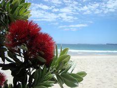 Pohutakawa tree at Otama. Long White Cloud, Printmaking, New Zealand, My Photos, To Go, Trees, Tattoo, Garden, Nature