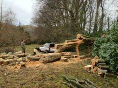 20 ton fallen tree.
