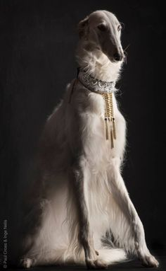 Borzoi by Paul Croes