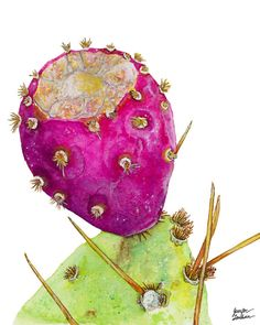 8x10 Art Print Prickly Pear Cactus Fruit by TheOpulentNest on Etsy, $18.00