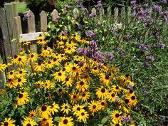 Summer flowers...Black-Eyed-Susans and Verbena