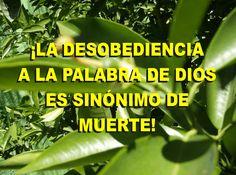 ¡LA DESOBEDIENCIA A LA PALABRA DE DIOS SE SINÓNIMO DE MUERTE!