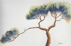 A solo exhibition! Single Tree, Watercolor Landscape, Tree Art, Line Drawing, Art Blog, Art Work, Original Art, Old Things, About Me Blog