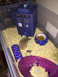 Another pinner says: My hedgehog Sebastian. I made his TARDIS house and Mario tube. Nerdiest hedgehog ever.