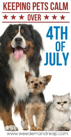 Keep your Pets calm ( SAFE) over 4th of July! Great tips! #pets #safe #health
