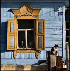 Siberian cat and beautiful shutters, Irkutsk, Russia Wooden Architecture, Russian Architecture, Cool Cats, I Love Cats, Bobtail Cat, Foto Poster, Fancy Cats, Siberian Cat, Curious Cat