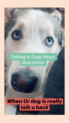 Funny Animal Videos, Cute Funny Animals, Animal Memes, Cute Baby Animals, Funny Dogs, Cute Puppies, Cute Dogs, Dogs And Puppies, Animal Hugs