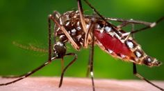 http://news.xpertxone.com/many-in-us-unaware-of-key-facts-on-zika-virus-study/
