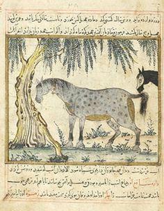 Benefits of animals, Maragheh, Iran, 1297-1298 or 1299-1300, Morgan Library