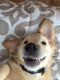Teens! This Dog with Braces Gets You and Your Struggles | Wesley's crooked teeth were preventing him from eating