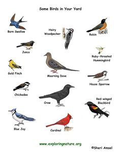 you can see these birds in your garden or yard Birds Pictures With Names, Names Of Birds, Bird Pictures, Animals Name List, Animals Name In English, Different Birds, Kinds Of Birds, Birds For Kids, Small Birds