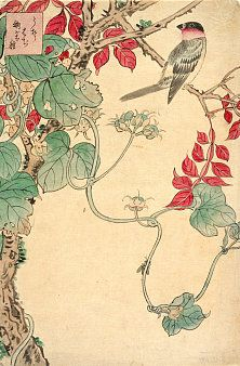 Nakayama Sugakudo, Pěnice na psím vínu (Uzura, hadži, naimjótane), kolem 1858 - Výstava Stín kvetoucí sakury v Olomouci: http://art.ihned.cz/umeni-a-design/c1-55756690