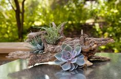 30 Beautiful Ways to Use Succulents in Weddings | OneWed
