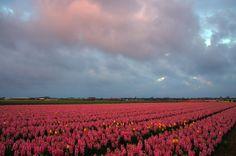 Flowers by Watze D. de Haan