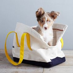 Love Thy Beast Carrying Tote - Natural - love this tote for Gucci, in WVU colors too! double win