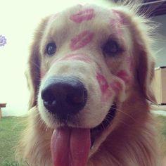 Een gekuste hond