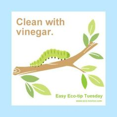 Easy Eco-tip: Clean with Vinegar