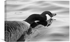 Long Necked Goose by Jason Moss