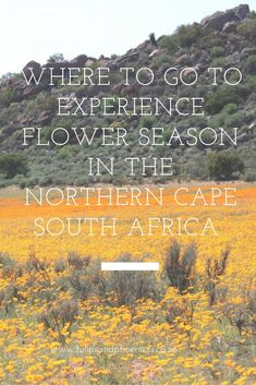 Flower season in the Northern Cape typically spells an explosion of colour in endless open spaces against the beautiful backdrop of mountains Places To Travel, Places To See, Visit South Africa, Bucket List Destinations, Outdoor Adventures, It's Easy, Where To Go, Road Trips, Beautiful Flowers