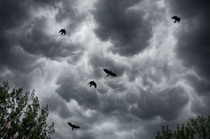 as the crow flies...