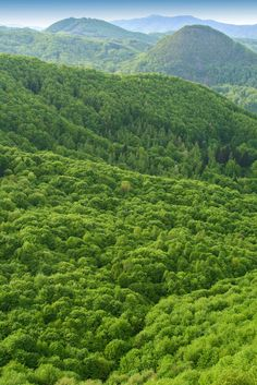 Forests store large amounts of carbon in their trunks and leaves, and play a major role in global climate. The BIOMASS satellite will map this effect on a global scale.