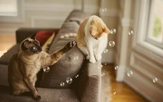 cats and bubbles <3
