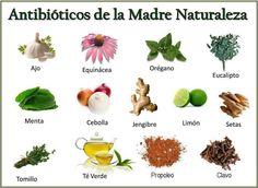 Antibióticos de la madre naturaleza #alimentatubienestar