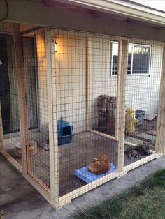 Outdoor cat area - catio