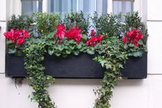 windowbox Valentine Box, Valentine Ideas, Fall Window Boxes, Flower Containers, Garden Structures, Floral Wreath, Yard, Windows, Holidays