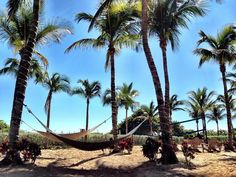 Hammocks on the beach in Miami. Waverly at Surfside private beach area.  #Lucal #LucalHQ #hammock #travel #travelgram #instatravel #wanderlust #traveladdict #saturday #sea #sunset #vsco #instagood #tbt #picoftheday #sun #sky #paradise #beautiful #blue #miami #usa #waves #tranquil #clouds #naturalbeauty #perfect #vibes #relax #weekend  Source: Ines Hegedus-Garcia on Flicker *Edited by Lucal*