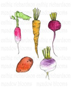 Root Vegetables Illustration Kitchen Art Print PDF Instant Digital Download on Etsy, $10.67 CAD