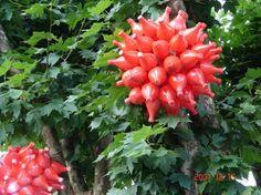 decoração de natal em jardins - Pesquisa Google