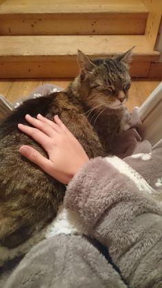 Stealing Grandpas Chair.More Cute Cats | Nice Lil Kitties | Pinterest | Cat