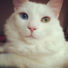{oh, those eyes!}