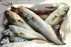 dekoratif balık fotoğrafları - Google'da Ara