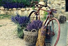 Bicycle, lavender, France