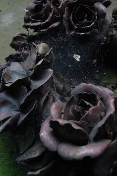 ❈ Fleurs Foncées ❈ dark art photography flowers & botanical prints - black roses