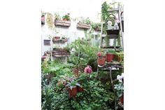 """Dos departamentos convertidos en espacios de trabajo  Cuando reformó este sector para convertirlo en su estudio mandó a hacer dos grandes ventanales que comunican con un patio que ella convirtió en un vergel. """"El contacto con las plantas, ver sus brotes, siempre te saca una sonrisa"""".  /Magalí Saberian"""
