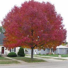 Conoce 10 árboles perfectos que realzarán tu pequeño jardín Buscar árboles para jardines pequeños no