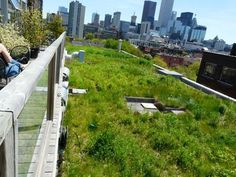 "Image result for ""green roof"" dichondra"