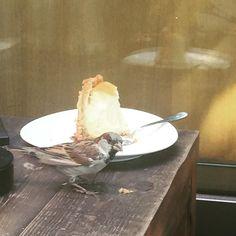 Unsere Begleitung beim heutigen Teammeeting: Großer Schnabel aber nur Käsekuchen im Kopf! #instaspatz #käsekuchen #rakuten