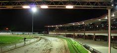 Greyhound Dog Racing In Peterborough
