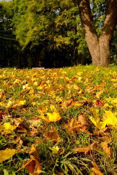 Autumn colors in Vyborg by Stas Kirenkov