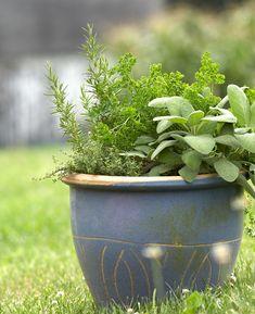 Herb Garden, Lawn And Garden, Garden Pots, Garden Ideas, Vegetable Garden, Landscape Design Small, Small Garden Design, Little Gardens, Small Gardens