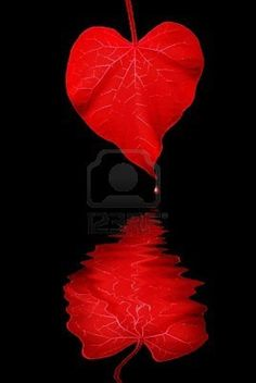 Deep Red Heart Shaped Morning Glory Leaf, With Stylized Grunge Wave Reflection and Drop of Falling Blood.  Photo by Terrance Emerson.