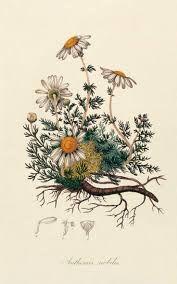 Картинки по запросу free botanical clipart