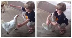 Boy Asks 'Love Bird' For A Hug – The Adorable Encounter Has Been Viewed By Over 2 Million Doodle Doo, Animal Rescue Site, Hug You, Cute Gif, Animals For Kids, Love Birds, Laugh Out Loud, The Funny, Little Boys