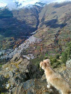 Vista de Trevélez Costa, Beautiful Scenery, Pet Birds, Grand Canyon, Pets, Places, Nature, Travel, Animals